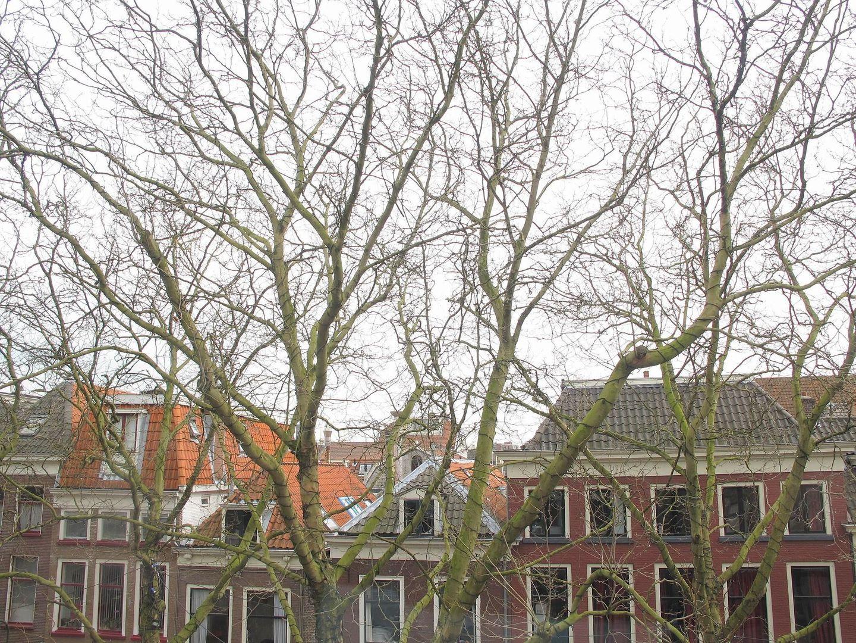 Burgwal 8 C, Delft foto-19
