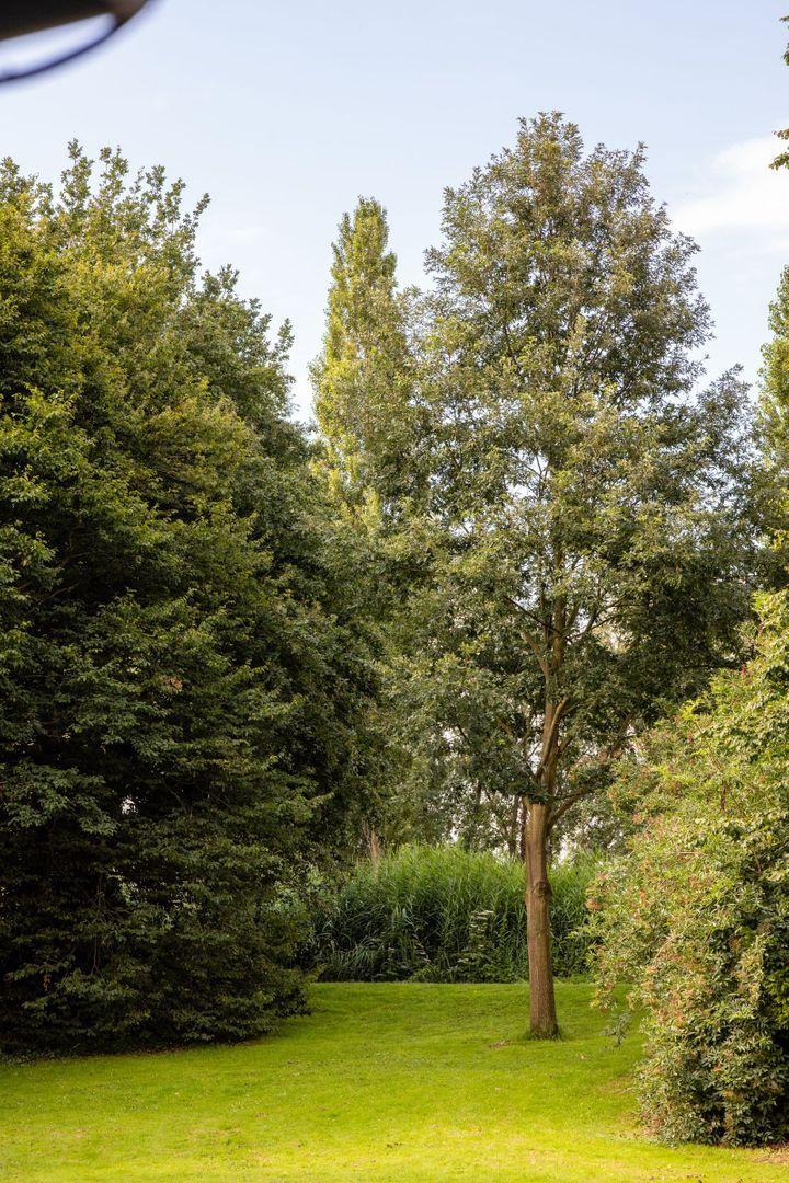 Prinses Beatrixplantsoen 6 E, Rotterdam foto-