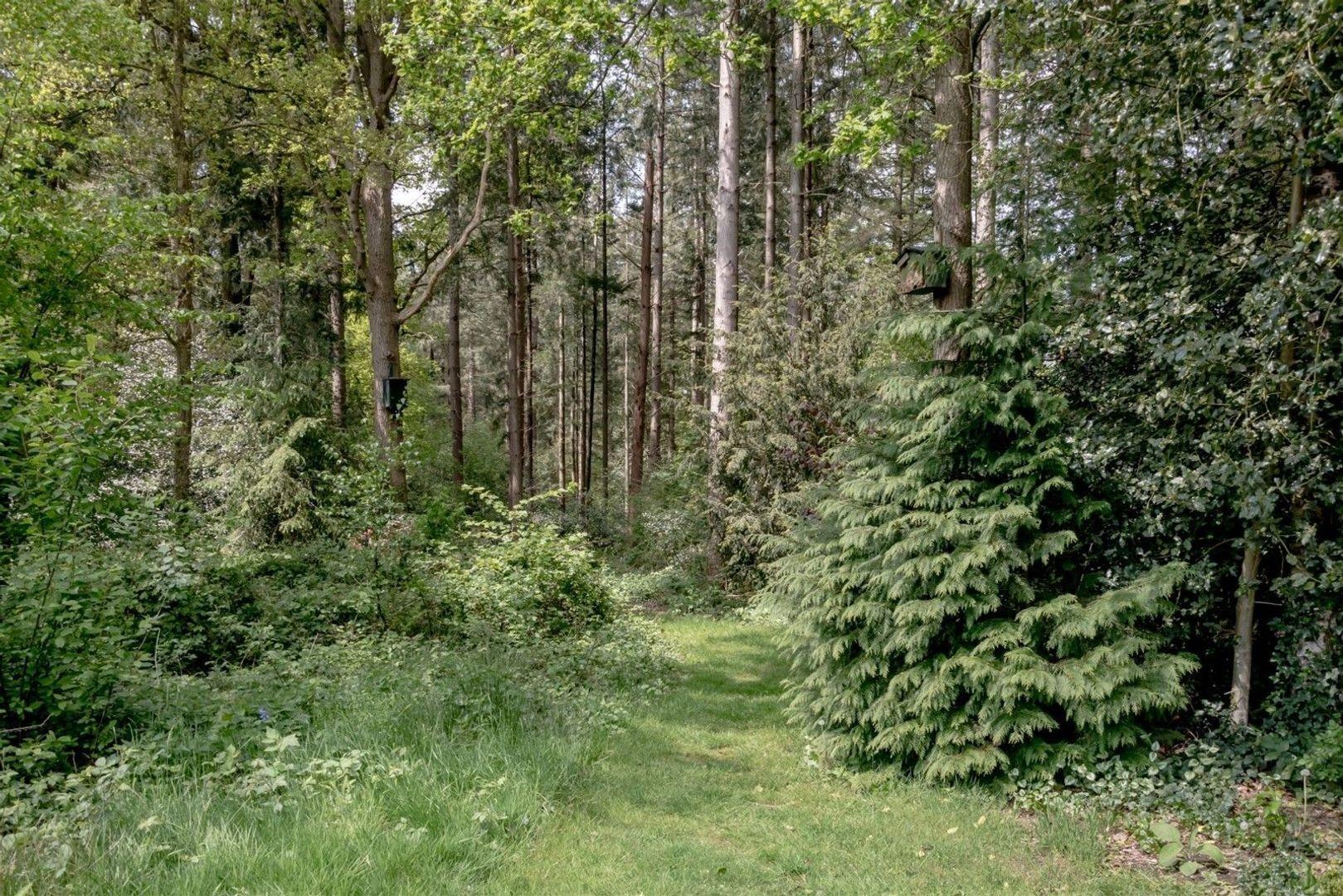 Bosbouwkamp 41, Vledder foto-