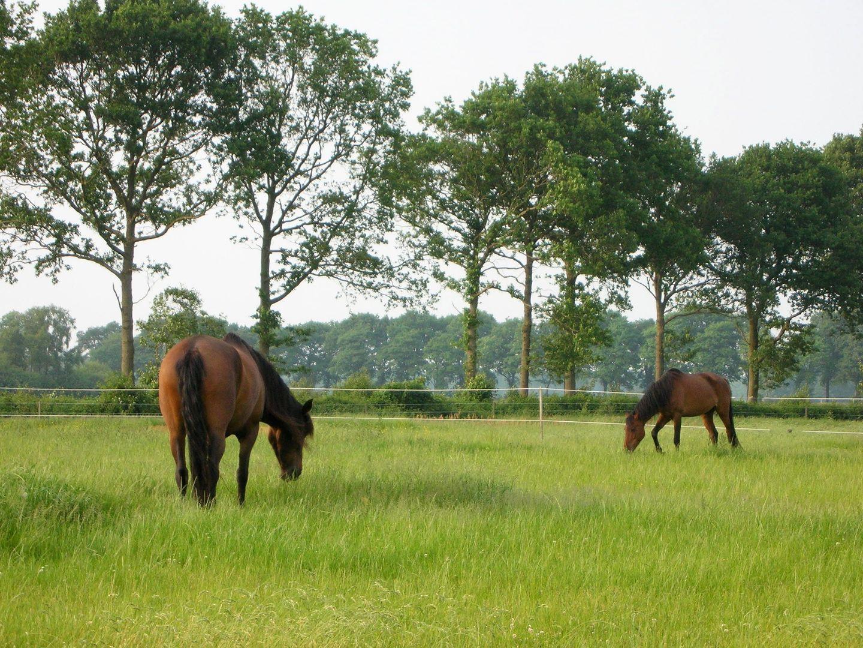 Steenmaatsdijk 2, Langedijke foto-