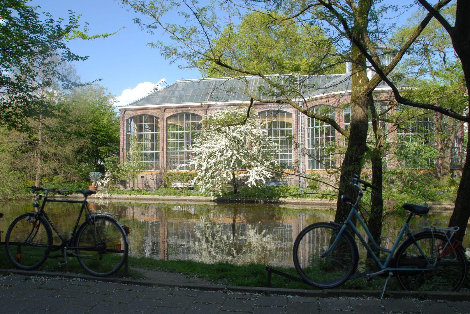 Hortusplantsoen 17, Amsterdam foto-21