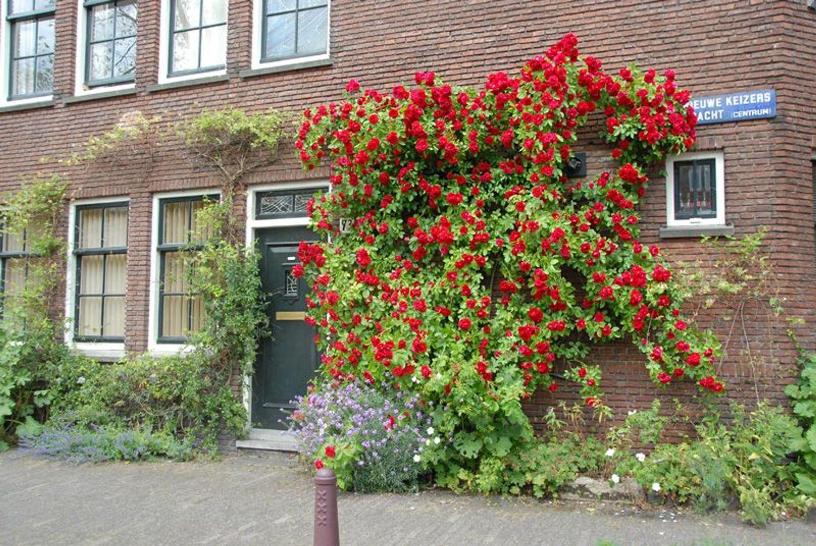 Hortusplantsoen 17, Amsterdam foto-14