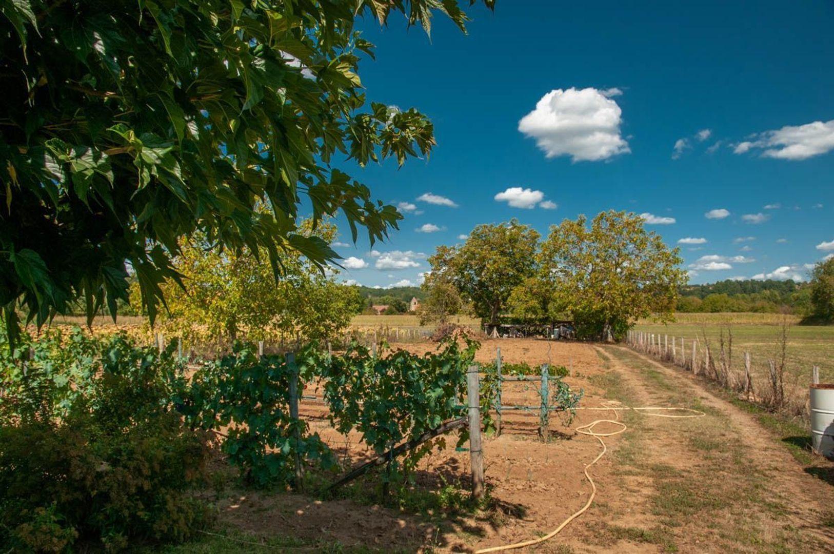 SI1284, Le Buisson-de-Cadouin foto-4 blur