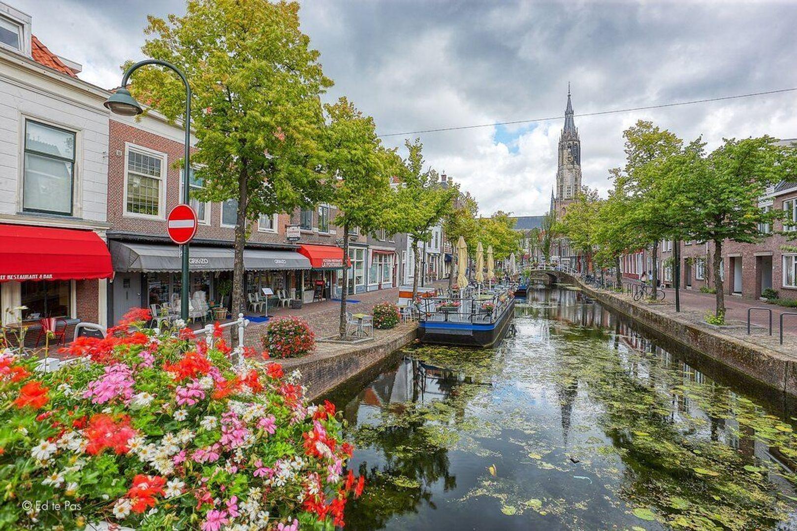 Pluympot, Delft foto-31 blur
