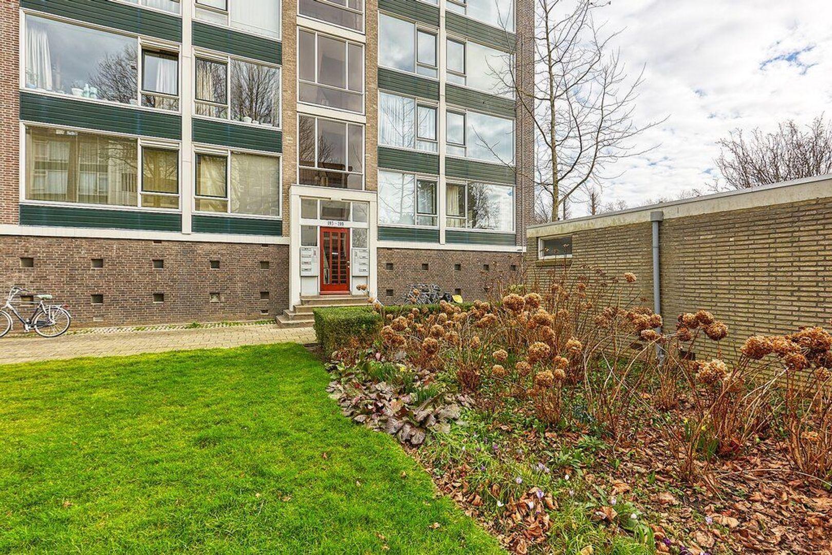 Smaragdhorst, Den Haag foto-19 blur