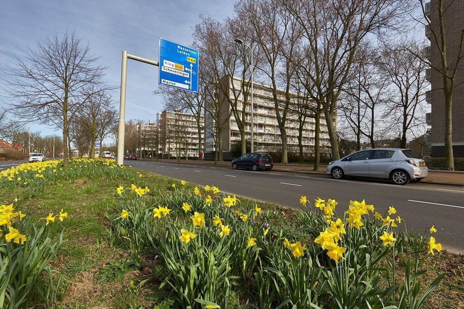 Smaragdhorst, Den Haag foto-28 blur