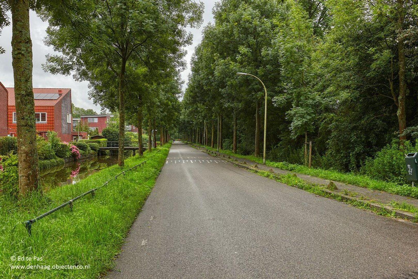 Wollegras, Den Haag foto-34 blur