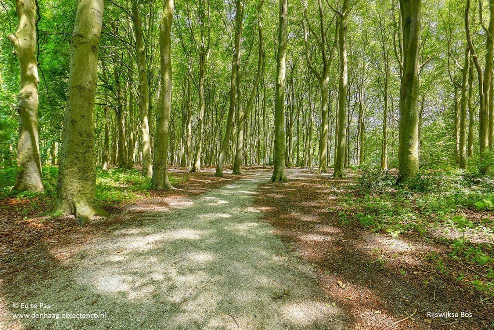 Park de Wervelaan, Rijswijk foto-31 blur