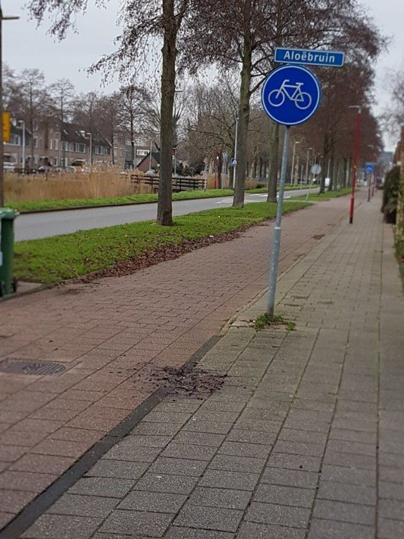 Aloëbruin 56, Zoetermeer foto-51